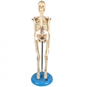 Esqueleto de 45 Cm
