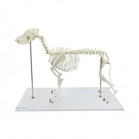 Esqueleto de Cachorro de Porte Grande (Resina Plástica)