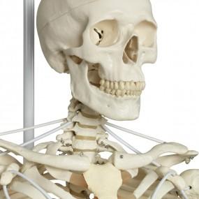 Esqueleto Feldi A15/3s, O Esqueleto Funcional em Metal de Suspensão de Metal com 5 Rolos