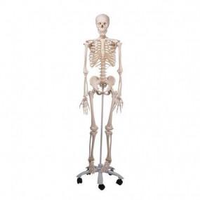 Esqueleto Stan A10, sobre Apoio de 5 Pés de Rodinha