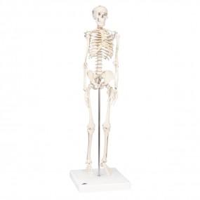 Mini-esqueleto ?shorty?, sobre Base