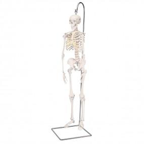 Mini-esqueleto ?shorty?, Suspenso em Tripé