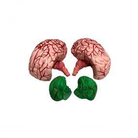 Modelo Anatômico Cérebro Ampliado 12 Partes