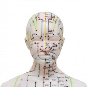 Modelo Anatomico de Acumpultura Feminino de 50cm