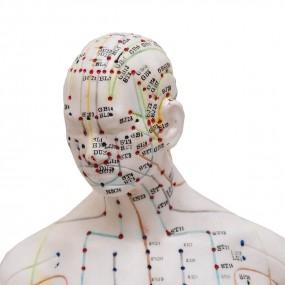 Modelo Anatomico de Acumpultura Masculino de 50cm