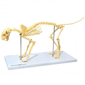 Modelo Anatomico Esqueleto de Gato em Resina