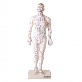 Modelo de Acupuntura de 50 Cm, Masculino
