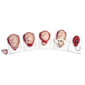 Modelo de Processo de Nascimento