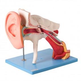 Ouvido Ampliado, Clássico, em 8 Partes