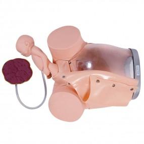 Simulador de Parto com Cervix, Episiotomia E Feto com Placenta