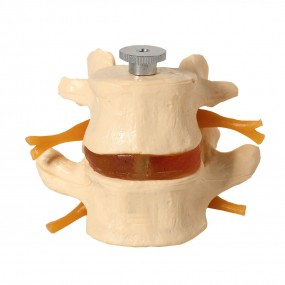 Vértebras Lombares 2 Peças
