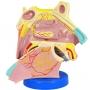 Anatomia do Nariz Ampliado