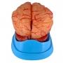 Cérebro com Artérias com 9 Partes