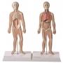 Conj. de Pranchas Iniciação ao Estudo Anatômico Dos Principais Sistemas do Corpo Humano - Anatomic - TZJ-0328-K