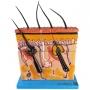 Corte de Pele Ampliada em Camadas - Anatomic - TGD-0331-A