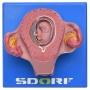 Desenvolvimento Embrionário em 8 Estágios - Sdorf - SD-5068