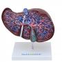 Fígado Luxo - Sdorf - SD-5049