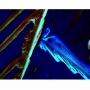 Microscopia Câmera Digital  CCD 5.0 Mega Pixel  com software de medicao e tratamento de imagens, especial para fluorescê