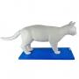 Modelo Anatomico Anatomia do Gato