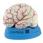 Modelo Anatomico Cérebro Tamanho Natural, em 8 Partes