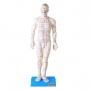 Modelo Anatomico de Acupuntura de 50 Cm, Masculino
