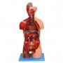 Modelo Anatomico Torso Luxo 85 Cm, Bissexual, com Coluna Exposta, em 32 Partes