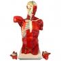Modelo Anatomico Torso Muscular 108cm Masculino c/ Órgãos Internos em 28 Partes