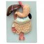 Sistema Digestório em 3 Partes