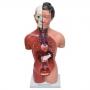 Torso Feminino de 42cm com 15 Partes