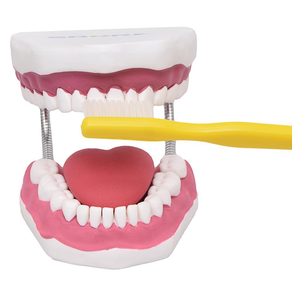 Arcada Dentária Gigante com Língua E Escova
