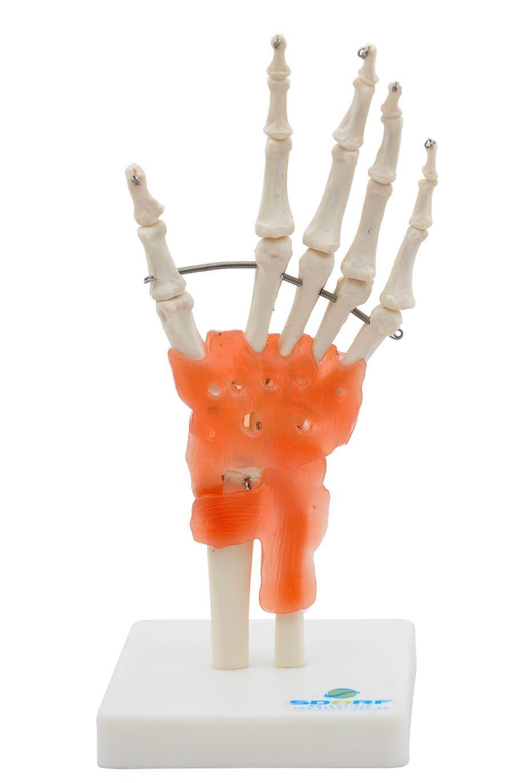 Articulação Da Mão