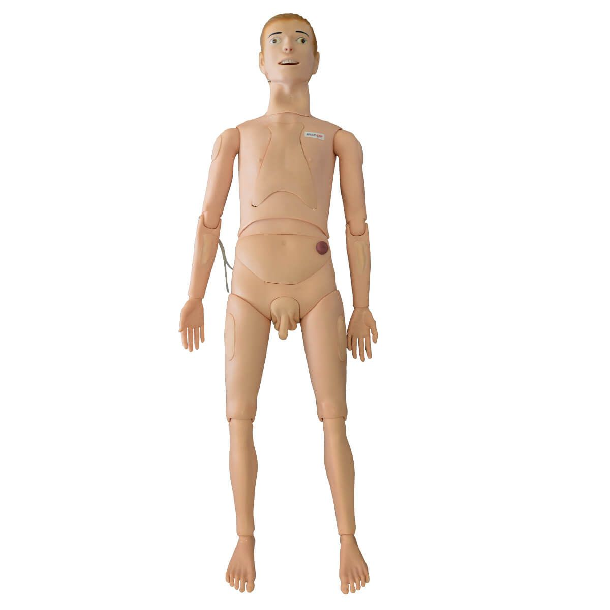 Manequim Adulto Bissexual, com Órgãos Internos para Treino de Enfermagem