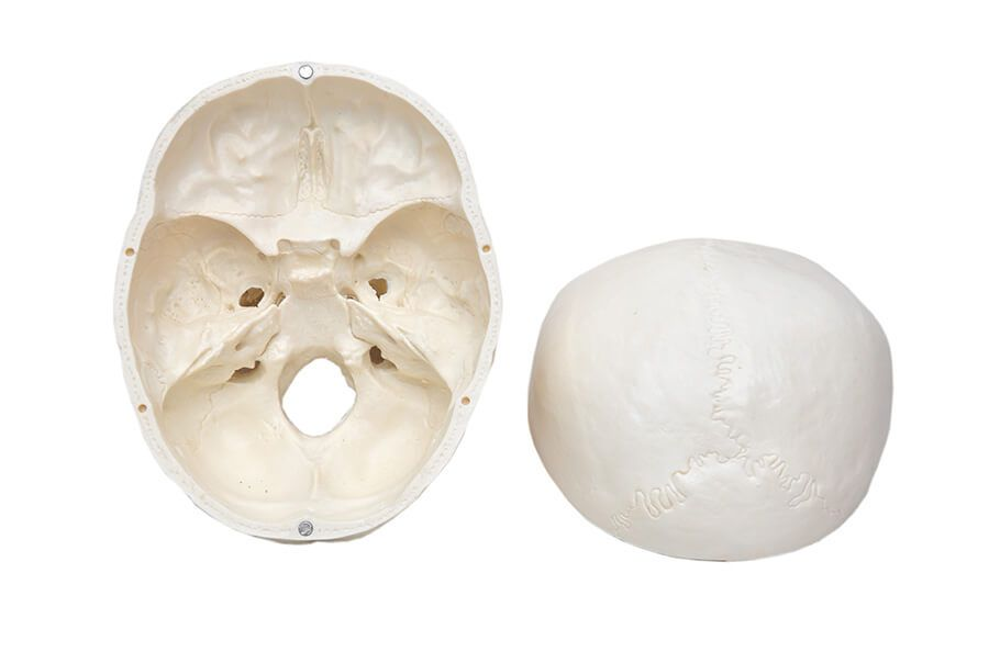 Modelo Anatômico Crânio Humano 5 Parte