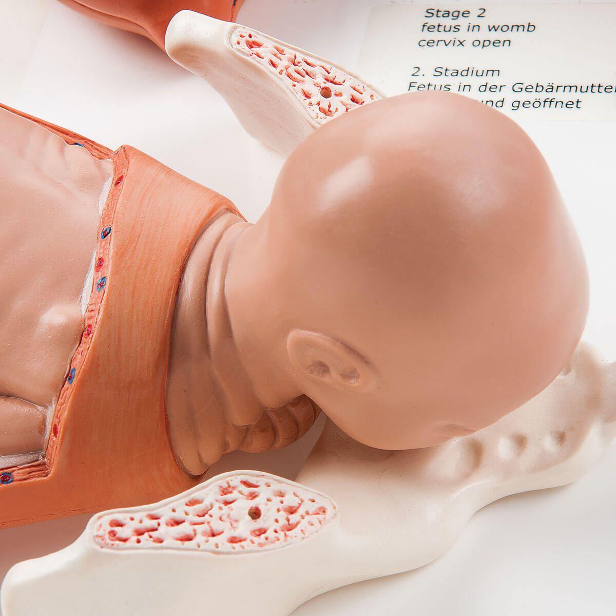 Modelo Dos Estágios do Nascimento
