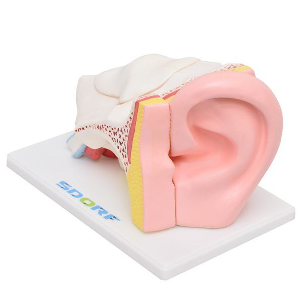 Ouvido Ampliado com 6 Partes