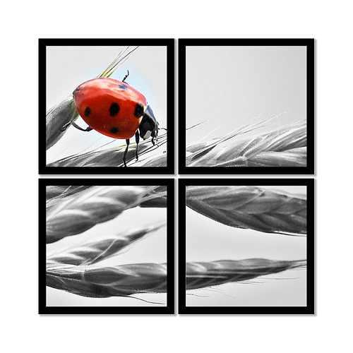 Quadro Mosaico 72x72cm Joaninha Vermelha P&b C/ Mold.