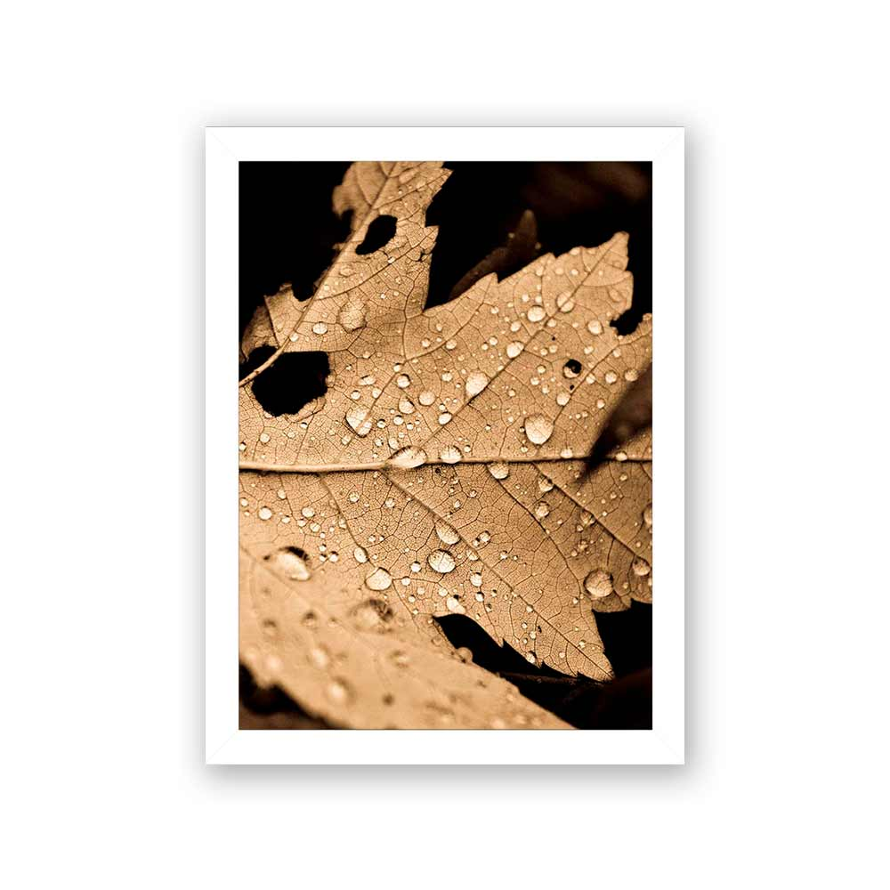 Quadro Decorativo 27x36 Folha de Seca com Gotas D'Água