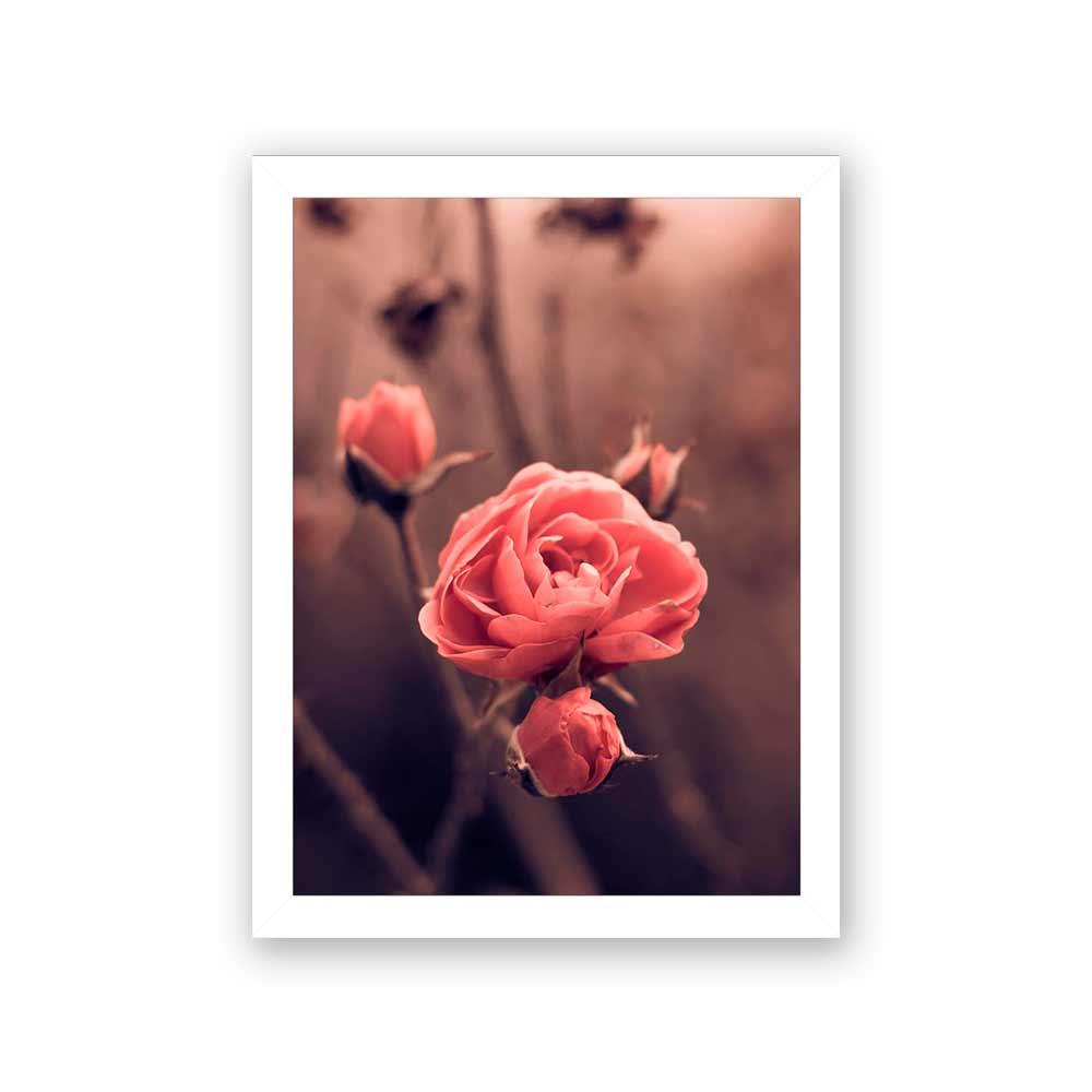 Quadro Decorativo 27x36 Foto de Rosa Vintage