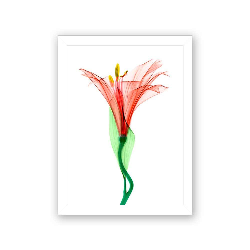 Quadro Decorativo 27x36 Raio X De Flor