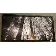 Quadro Preto- Vista Floresta 430-12