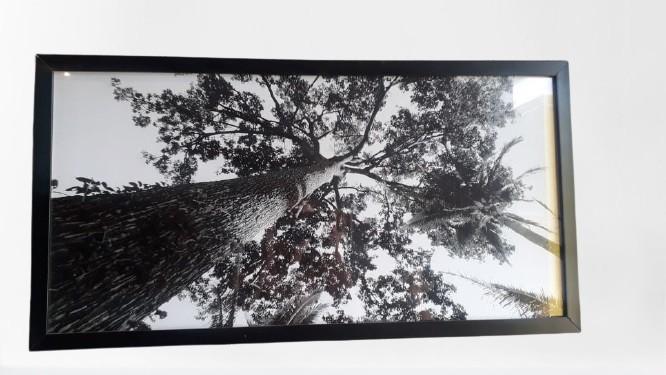 Quadro Preto- Vista árvore
