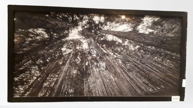 Quadro Preto- Vista Àrvores