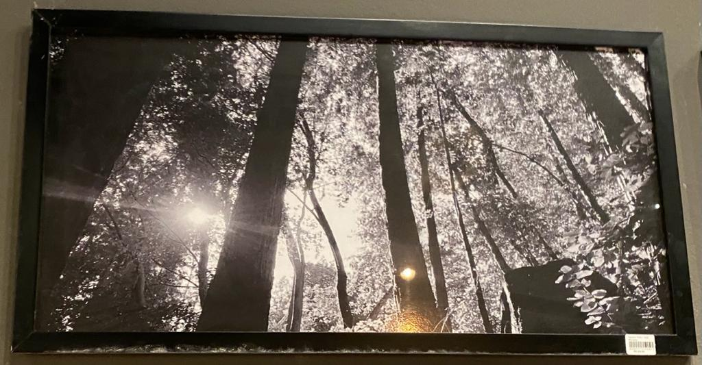Quadro Preto- Vista Floresta