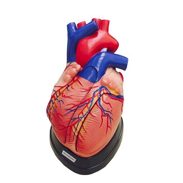 Coração Ampliado e 5 Partes