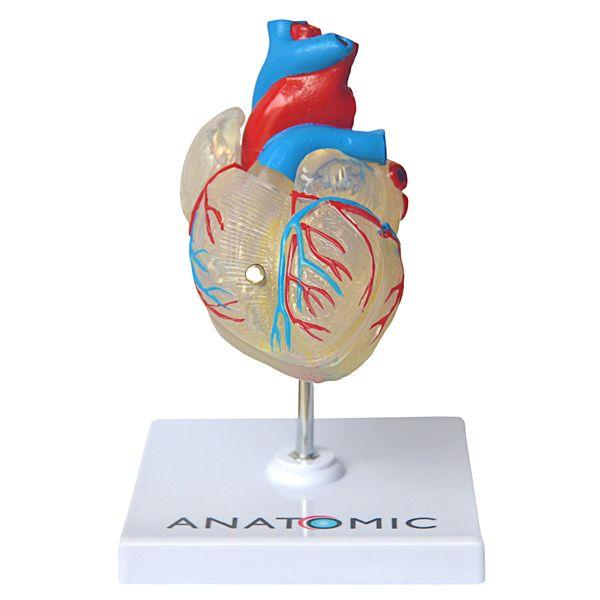 Coração transparente em 2 partes com sistema condutor