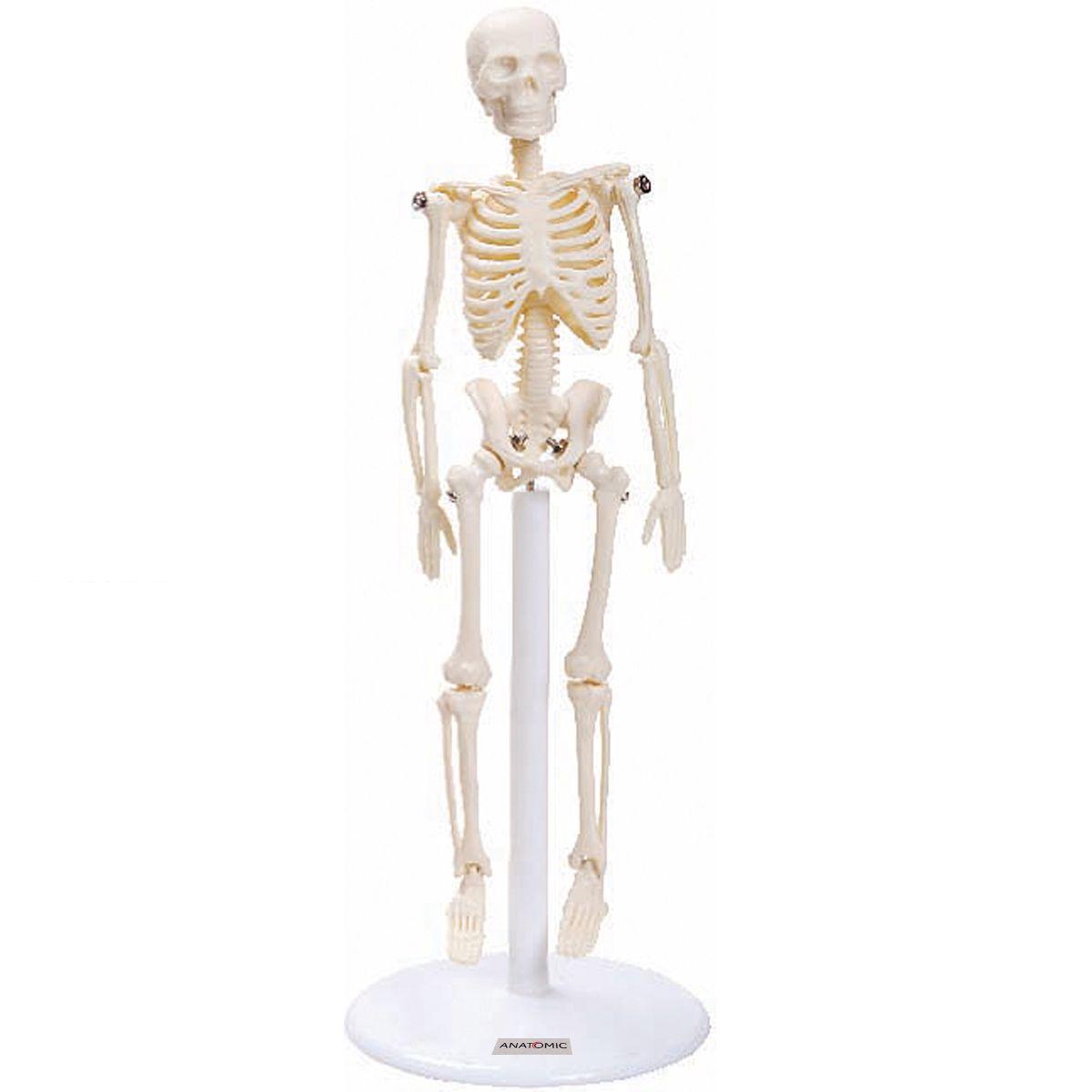 Esqueleto de 20cm