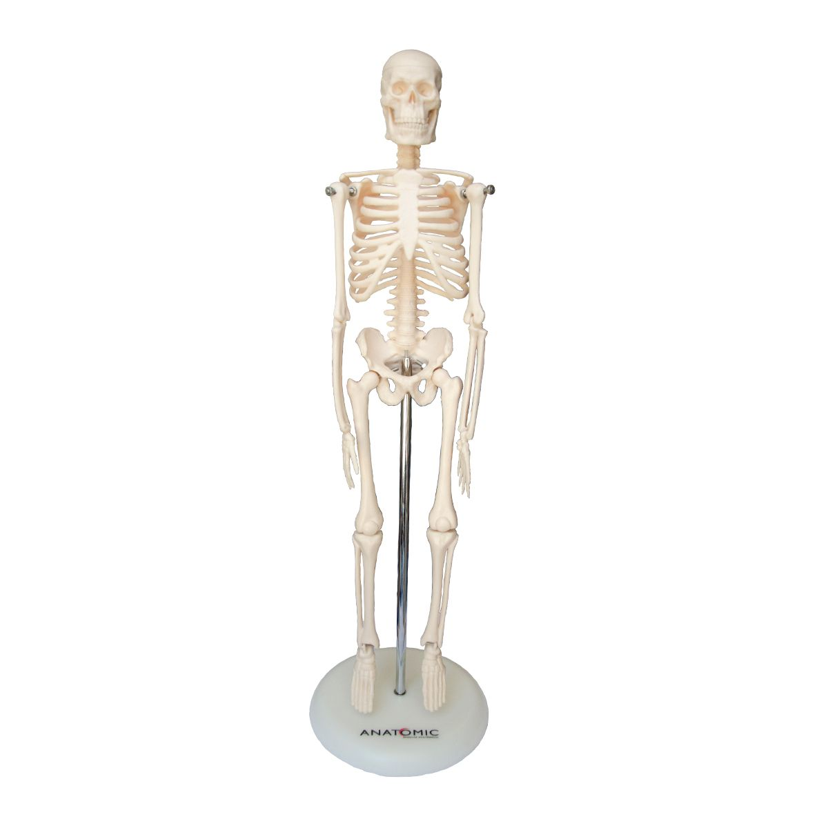 Esqueleto de 45cm