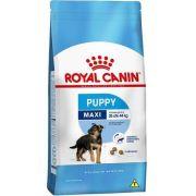 Ração Royal Canin Maxi Junior para cães filhotes de porte grande - 15 kg