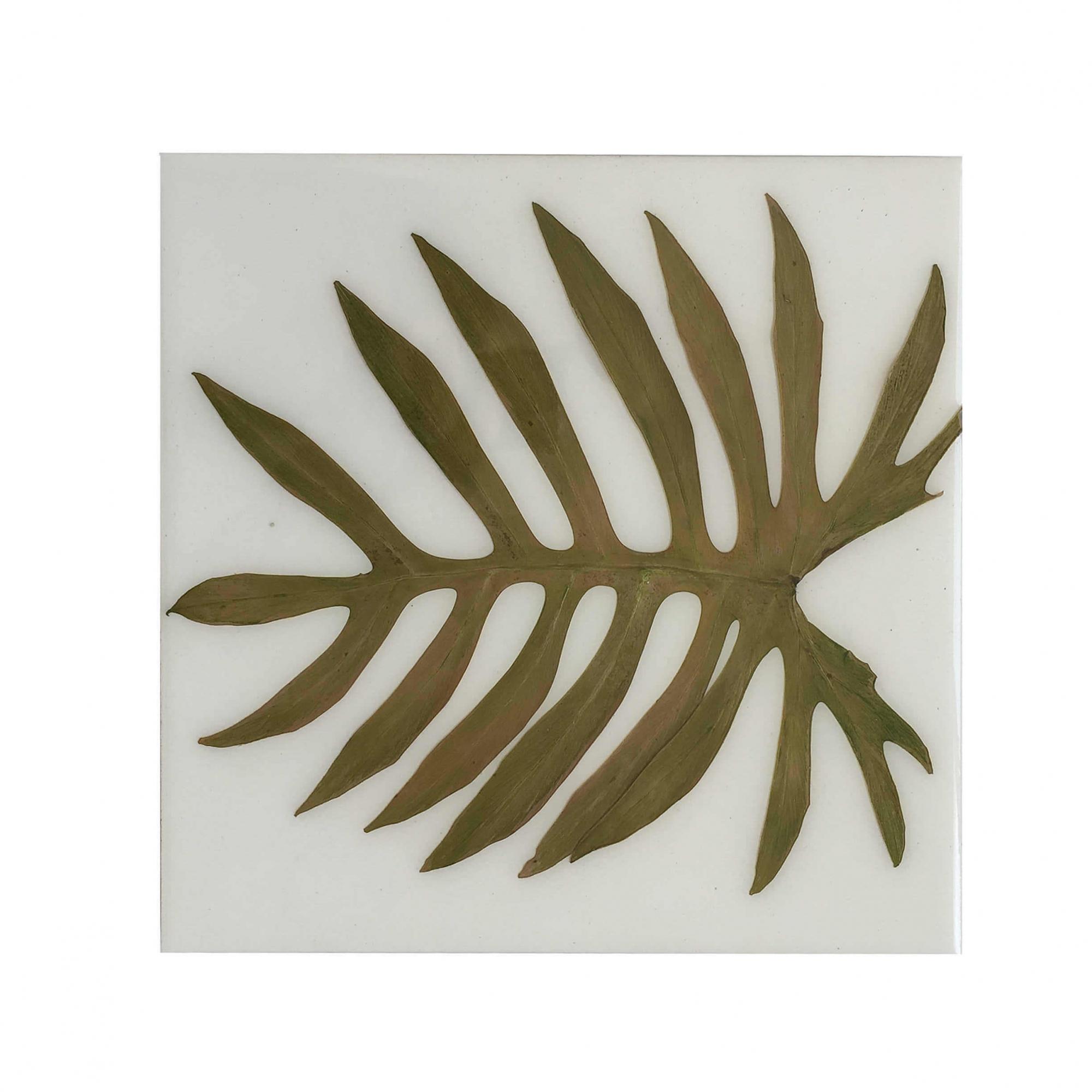 Painel Botânico Costela de Adão 25x25cm
