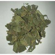 Gymnema Sylvestre 500mg - 60capsulas